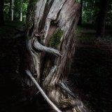 Tree Gnome In North Carolina