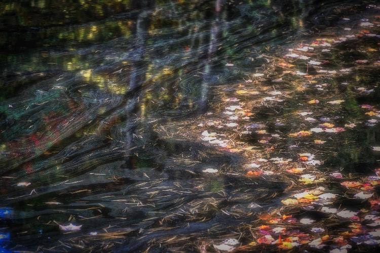 Patterns, Autumn Beaver Pond