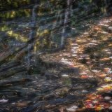 Patters, Autumn Beaver Pond