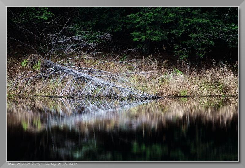 Edge Of The Marsh