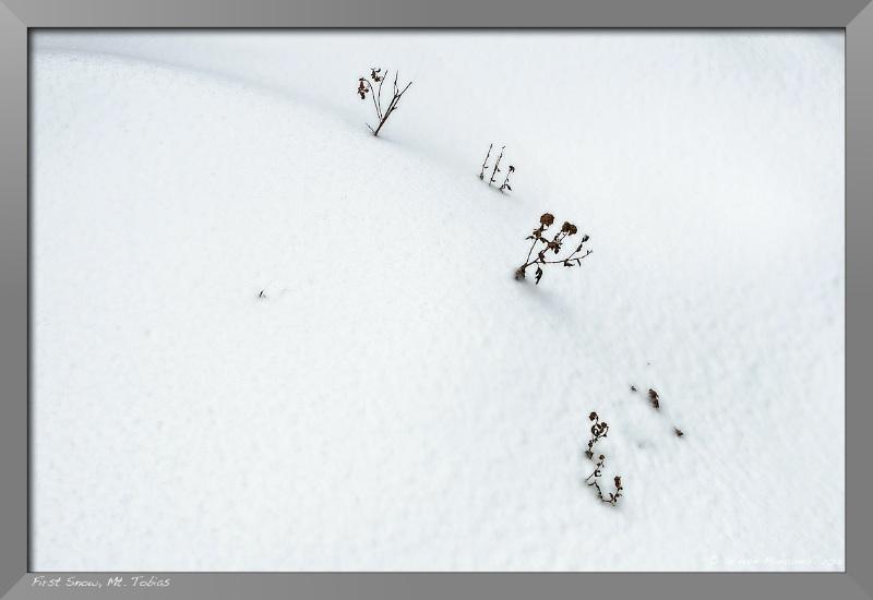 First Snow Series