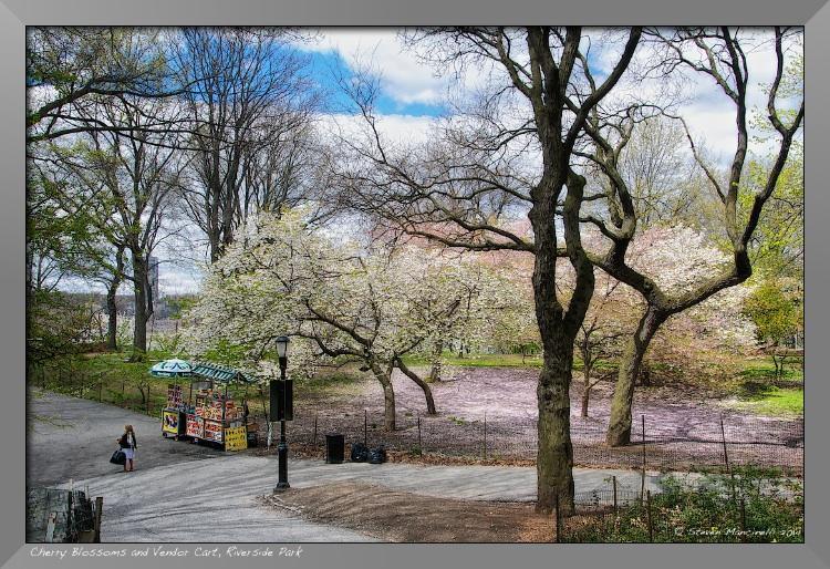 Cherry Blossoms and Vendor Cart, Riverside Park