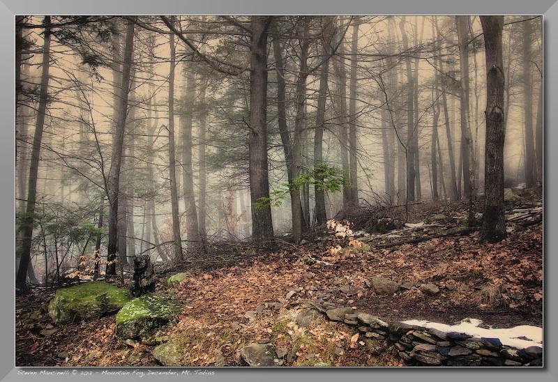 Mountain Fog, December, Mt. Tobias