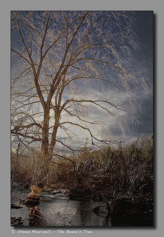 The Beaver's Tree