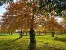 'Autumn Sunlight'