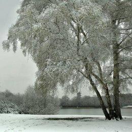 VirginiaWaterTrees