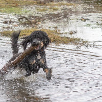 Truffs loving the wet Forest-4853