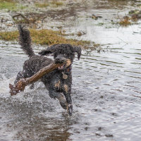 Truffs loving the wet Forest-4854