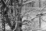Snowy tree and fence