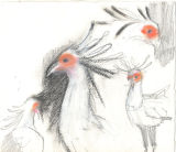 Secretary Birds.