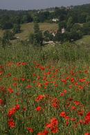 Poppies overlooking Hughenden Church
