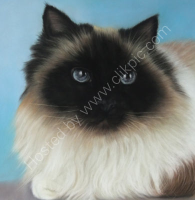 Chino is owned by Nicky and Mark, he is a stunning Birman whose story you can read by clicking on his painting.