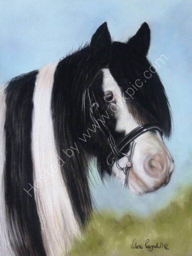 This is Charlie who belongs to Sarah and was commissioned by her partner Dan.  You can read his story by clicking on his painting