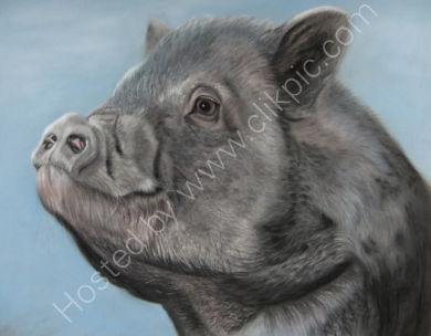 This is Crackle (minus his slobber!) who belongs to Kay, he is my first pig painting