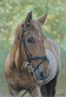 This is Eddie who belongs to Peter, please click on Eddie's painting to read more