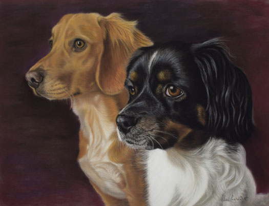 These are for Julie, they are both rescued dogs