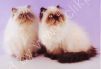 heathers cats