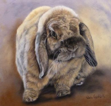 Jack the bunny