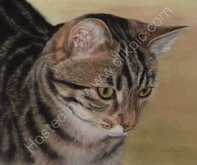 Millie - belongs to Sara and John, you can read about her by clicking on the painting