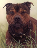 This is Ozzie who was painted for Lesley