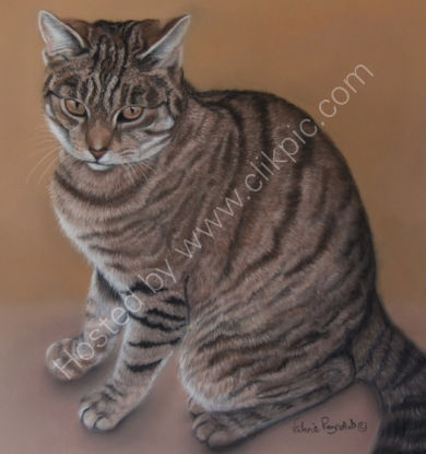 Tiger Lilly belonged to Kaylee and was very loved.  She is sadly no longer with us, you can read her story by clicking on Tiger Lilly's painting