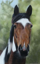 This is Warrior who belongs to Valerie