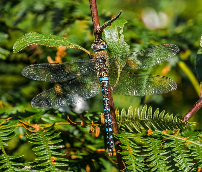 Migrant Hawker by Phil Harris