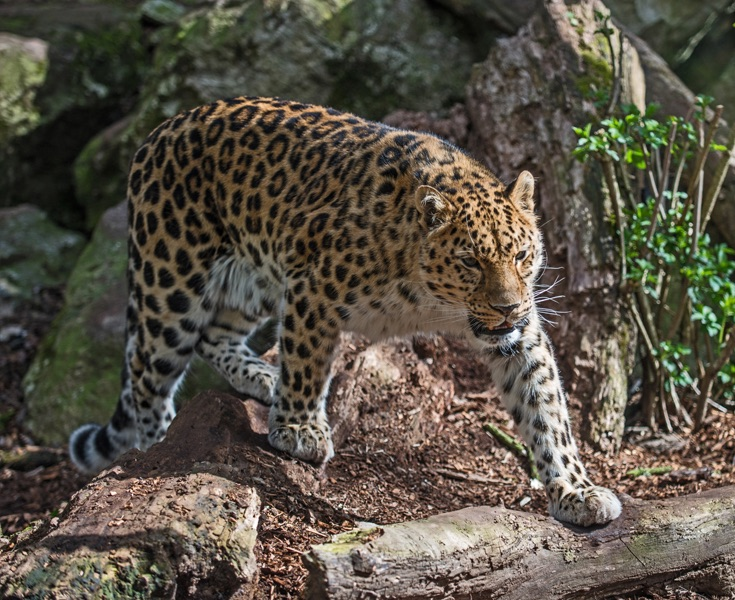On the Prowl by Phil Harris