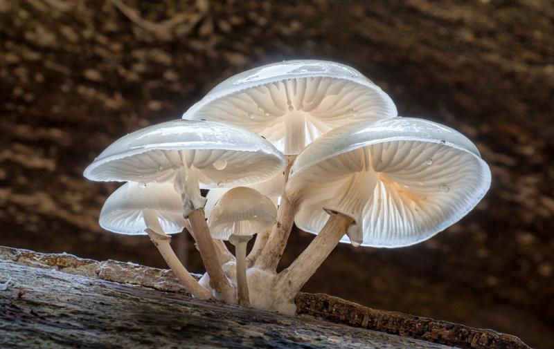 Porcelain Fungus by Alan Bevis