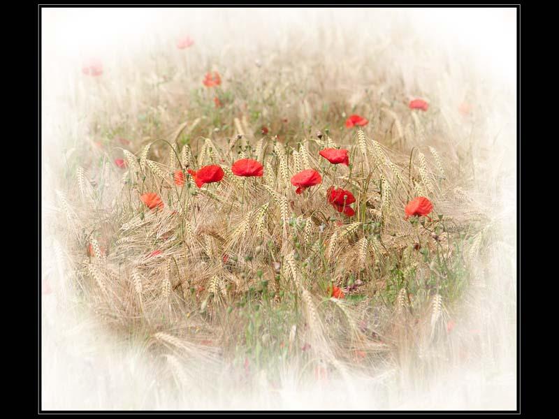 Remembrance 01 sm