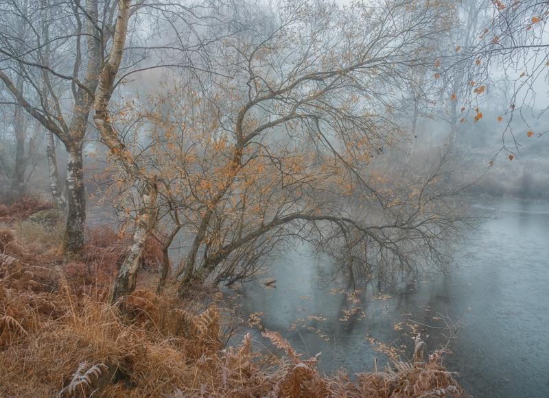 autumn on heathland