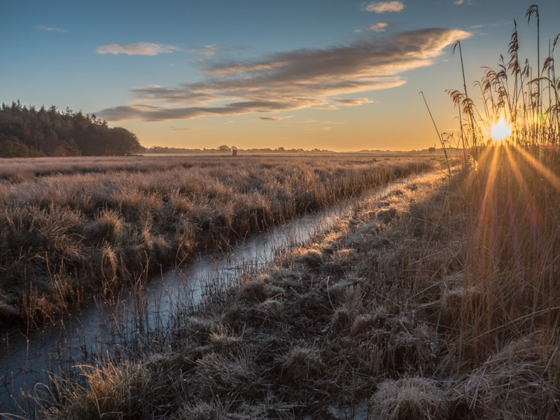 sunrise on hartland moor by mary bevis