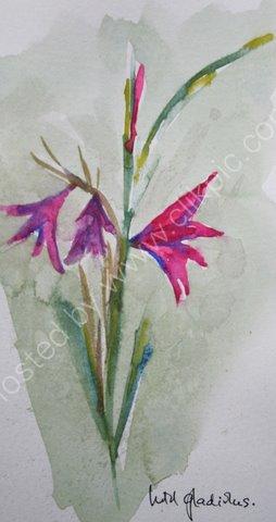 Wild Gladiolus, Crete