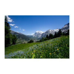Alpine-spring