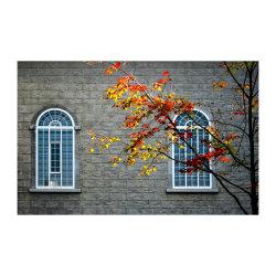 Windows on autumn