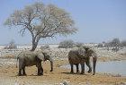 Elephants at waterhole, Etosha, Namibia