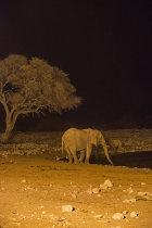 Elephant at floodlit waterhole. Etosha, Namibia