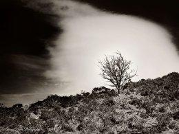 Llyn Y Fan Fach tree