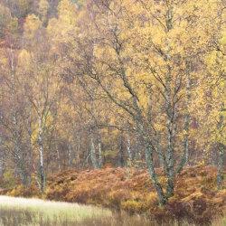 Schotland, Cairngorm National Park