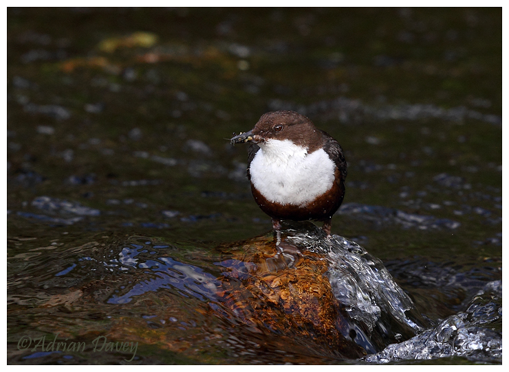 Dipper with food.