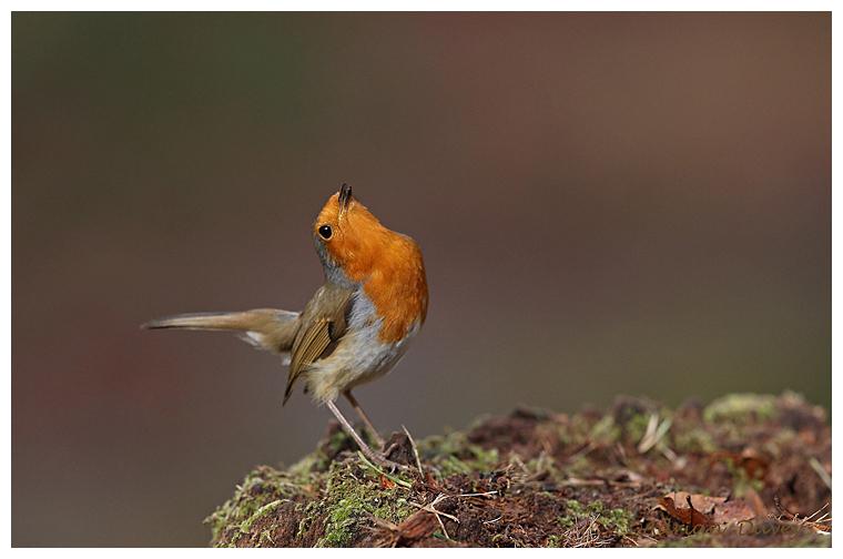 Aggressive Robin