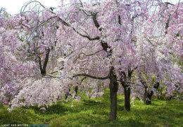 """Final Blossoms"""