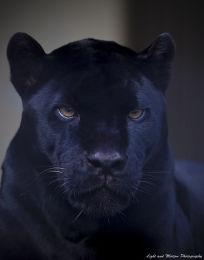 Jaguar. Top G+ Oct 2nd, 2012