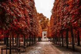 """Autumn in Paris"""