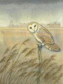 Barn Owl at Cley (print)