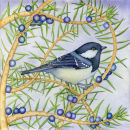 Coal Tit (print and card)