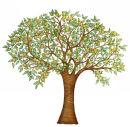 Orange Tree (NNUH)