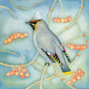Waxwing (print and card)