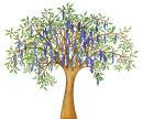 Wisteria and Bird Tree (NNUH)