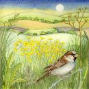 Sparrow (print and card)